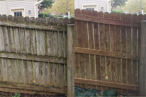 Fences Cleaning